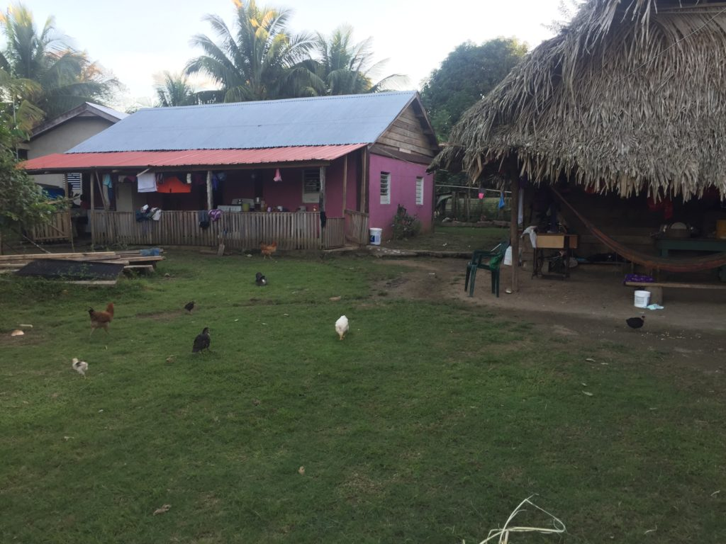 So many chickens