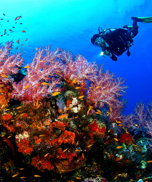 belize all inclusive packages diving