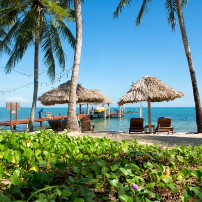 Tropical vines on Belize beach