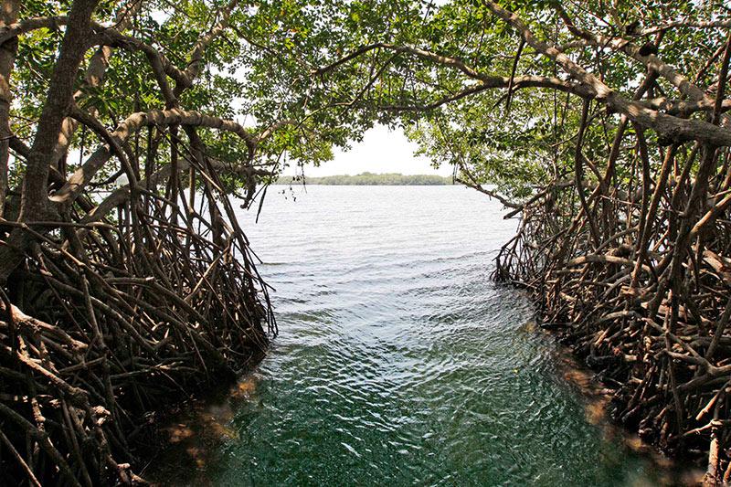 Belize estuary kayak