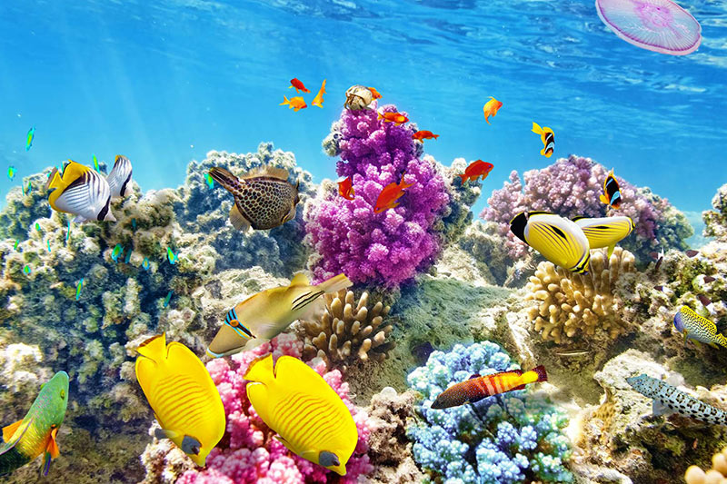 Belize interior reef
