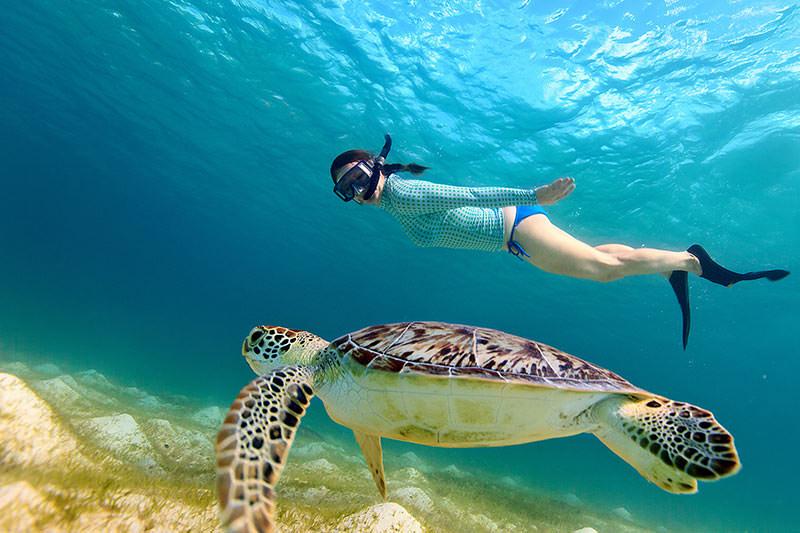 Belize trip turtle snorkel